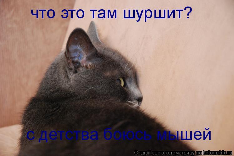 Котоматрица: с детства боюсь мышей что это там шуршит?