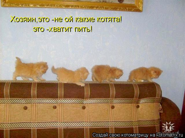 Котоматрица: Хозяин,это -не ой какие котята! это -хватит пить!