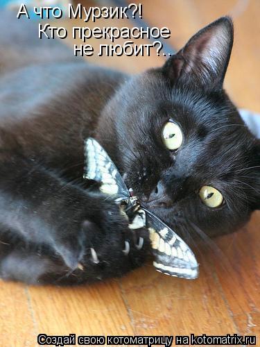 Котоматрица: А что Мурзик?! Кто прекрасное не любит?..