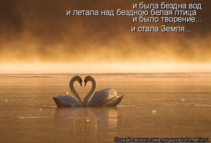 Котоматрица: и была бездна вод и летала над бездною белая птица и было творение... и стала Земля...