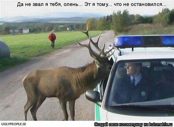Котоматрица: Да не звал я тебя, олень... Эт я тому... что не остановился...