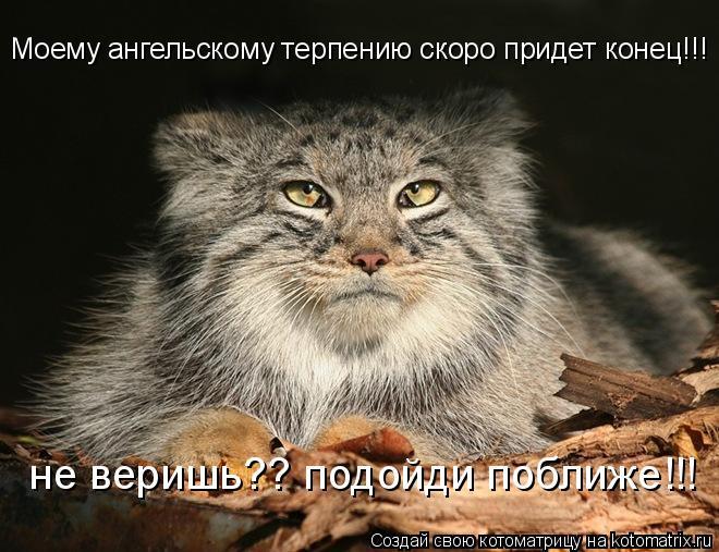 Котоматрица: Моему ангельскому терпению скоро придет конец!!! не веришь?? подойди поближе!!!