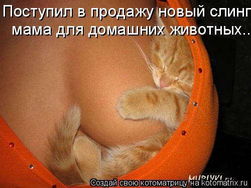 Котоматрица: Поступил в продажу новый слинг   мама для домашних животных...