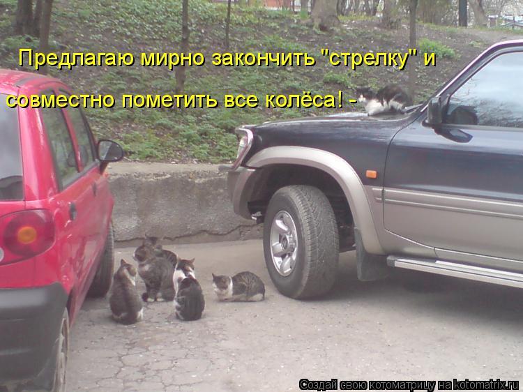 """Котоматрица: Предлагаю мирно закончить """"стрелку"""" и совместно пометить все колёса! -"""