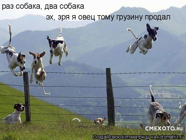 Котоматрица: раз собака, два собака эх, зря я овец тому грузину продал