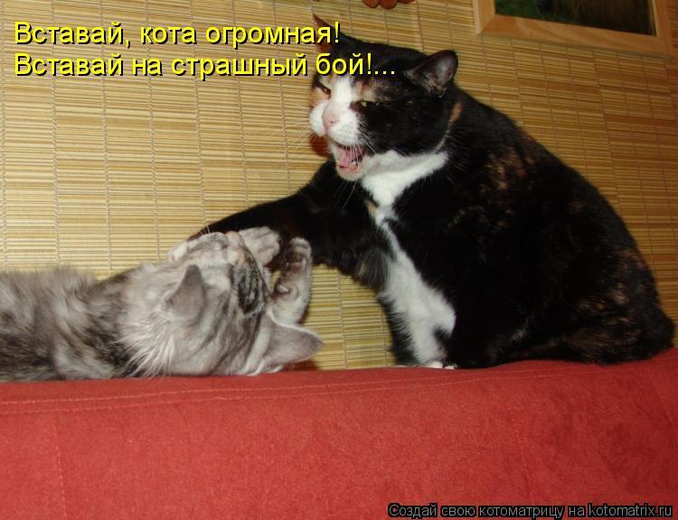 Котоматрица: Вставай, кота огромная! Вставай на страшный бой!...
