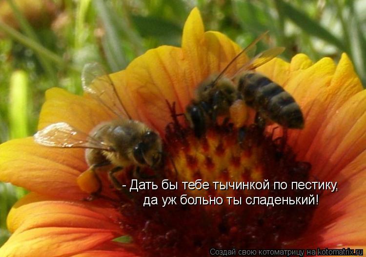Котоматрица: - Дать бы тебе тычинкой по пестику, да уж больно ты сладенький!