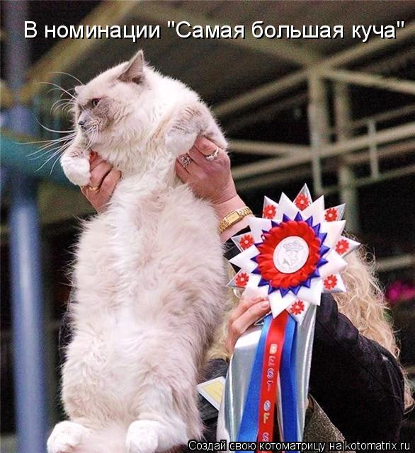 """Котоматрица: В номинации """"Самая большая куча"""""""