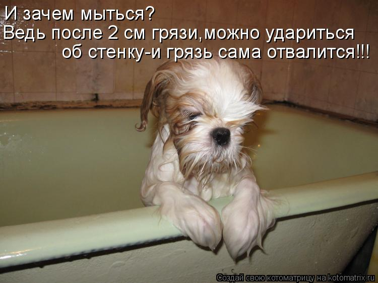 Котоматрица: И зачем мыться?  Ведь после 2 см грязи,можно удариться  об стенку-и грязь сама отвалится!!!