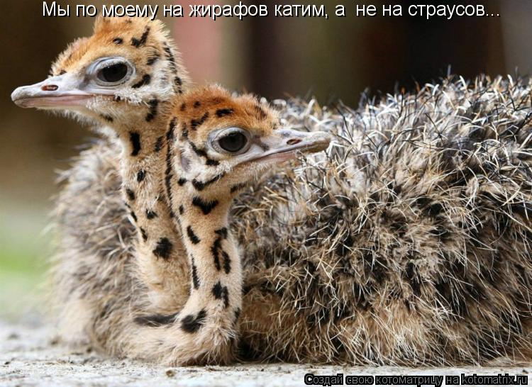 Котоматрица: Мы по моему на жирафов катим, а  не на страусов...