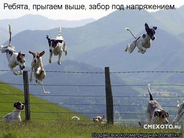 Котоматрица: Ребята, прыгаем выше, забор под напряжением.
