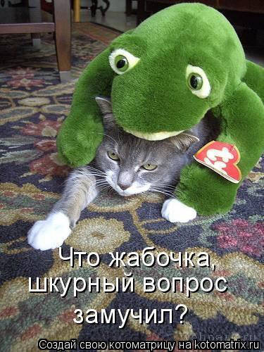 Котоматрица: Что жабочка, шкурный вопрос замучил?