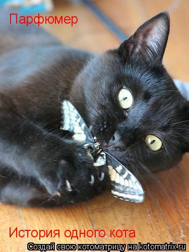 Котоматрица: Парфюмер История одного кота