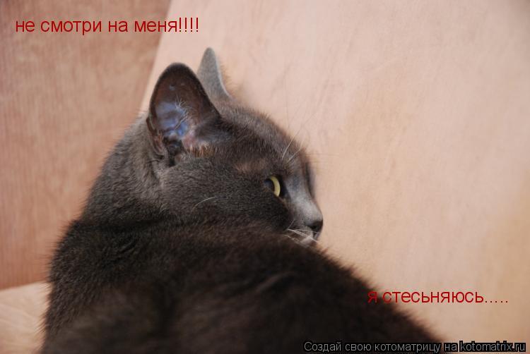 Котоматрица: не смотри на меня!!!! я стесьняюсь.....