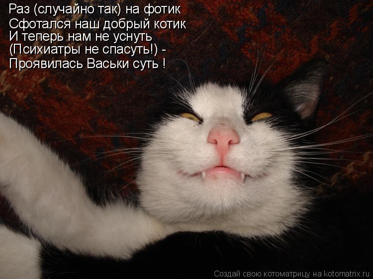 Котоматрица: Сфотался наш добрый котик И теперь нам не уснуть (Психиатры не спасуть!) - Проявилась Васьки суть ! Раз (случайно так) на фотик