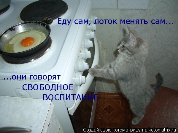 Котоматрица: Еду сам, лоток менять сам... ...они говорят СВОБОДНОЕ ВОСПИТАНИЕ