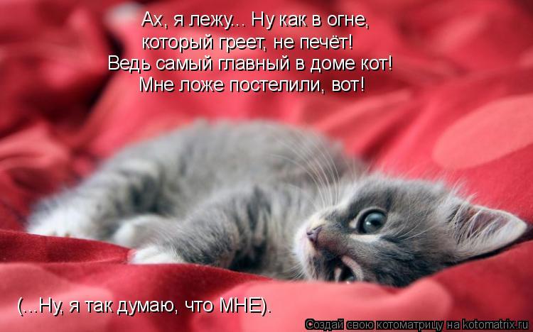 Котоматрица: Ах, я лежу….. Ну как в огне, который греет, не печёт! Ведь самый главный в доме кот!  Мне ложе постелили, вот! (…..Ну, я так думаю, что МНЕ).