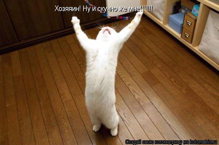 Котоматрица: Хозяяин! Ну и скучно же мне!!!!!!!