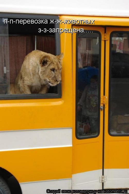 Котоматрица: п-п-перевозка ж-ж-животных з-з-запрещена.....