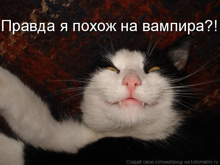 Котоматрица: Правда я похож на вампира?!