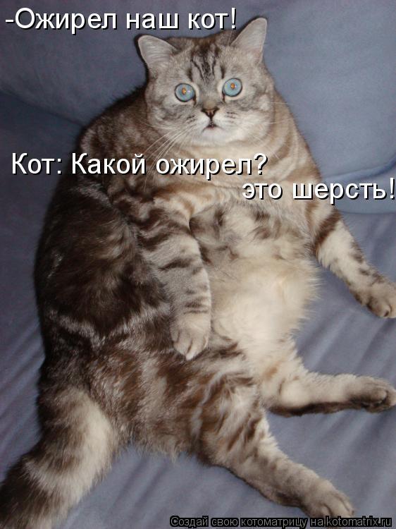 Котоматрица: -Ожирел наш кот! Кот: Какой ожирел? это шерсть!