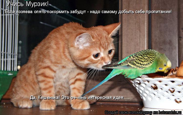 Котоматрица: Учись Мурзик! Если хозяева опять покормить забудут - надо самому добыть себе пропитание! Да, Кешенька! Это оч-чень интересная идея.....