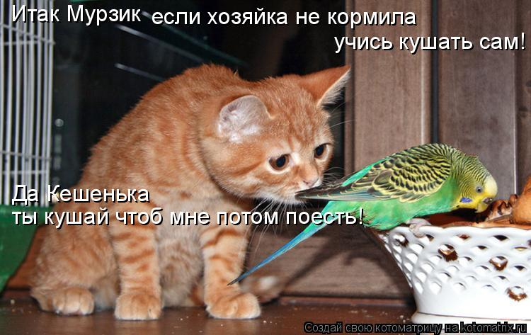Котоматрица: Итак Мурзик если хозяйка не кормила учись кушать сам! Да Кешенька ты кушай чтоб мне потом поесть!