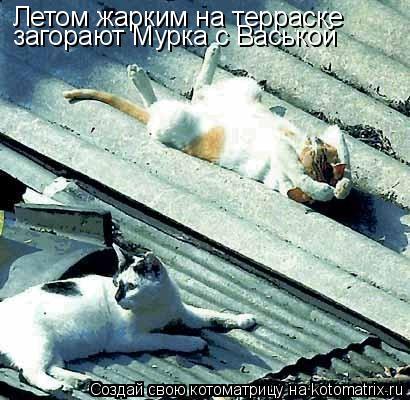 Котоматрица: Летом жарким на терраске загорают Мурка с Васькой