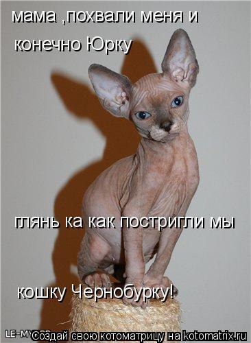 Котоматрица: мама ,похвали меня и конечно Юрку глянь ка как постригли мы  кошку Чернобурку!