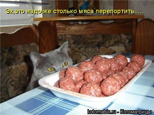Котоматрица: Эх,это надо же столько мяса перепортить.....