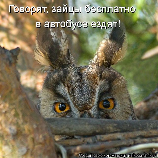 Котоматрица: Говорят, зайцы бесплатно   в автобусе ездят!