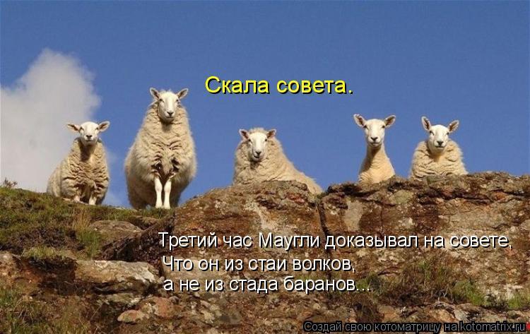 Котоматрица: Скала совета. Третий час Маугли доказывал на совете, Что он из стаи волков, а не из стада баранов...