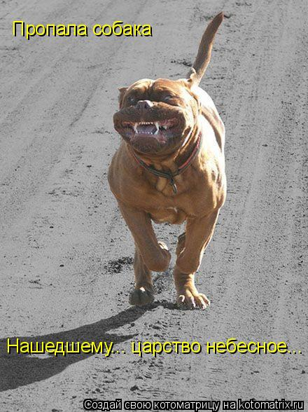 Котоматрица: Пропала собака   Нашедшему... царство небесное...