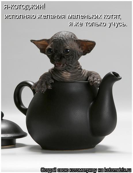 Котоматрица: я-котоджин!  исполняю желания маленьких котят,  я же только учусь.