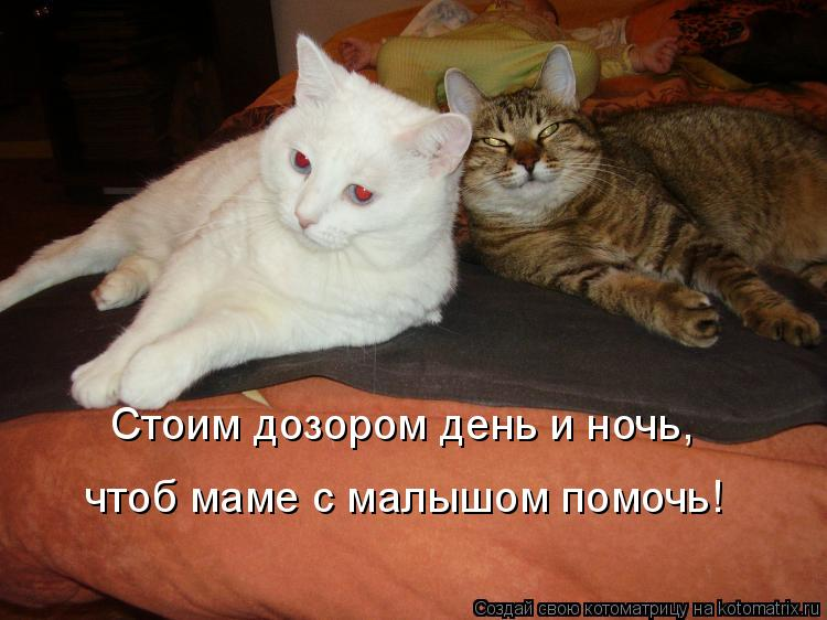 Котоматрица: Стоим дозором день и ночь, Стоим дозором день и ночь, чтоб маме с малышом помочь!