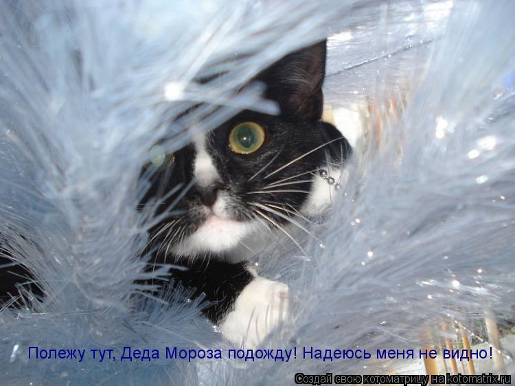 Котоматрица: Полежу тут, Деда Мороза подожду! Надеюсь меня не видно!