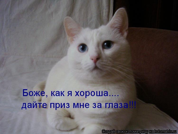 Котоматрица: Боже, как я хороша....  дайте приз мне за глаза!!!