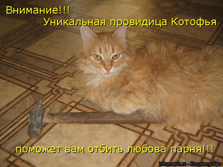 Котоматрица: Внимание!!! Уникальная провидица Котофья поможет вам отбить любова парня!!!