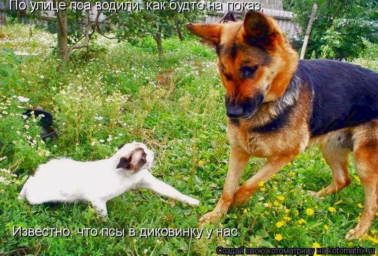 Котоматрица: По улице пса водили, как будто на показ, Известно, что псы в диковинку у нас.