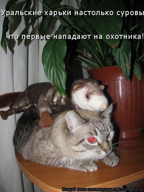 Котоматрица: Уральские харьки настолько суровы, что первые нападают на охотника!