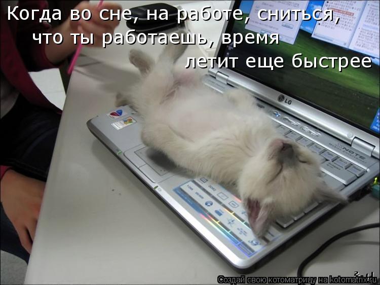 Котоматрица: Когда во сне, на работе, сниться, что ты работаешь, время  летит еще быстрее
