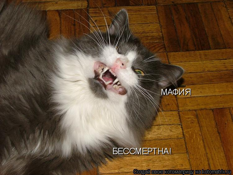 Котоматрица: МАФИЯ БЕССМЕРТНА!