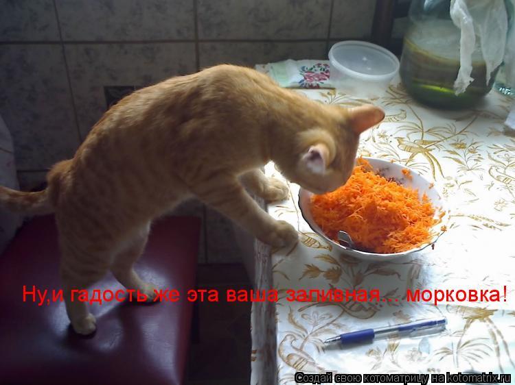 Котоматрица: Ну,и гадость же эта ваша заливная... морковка!