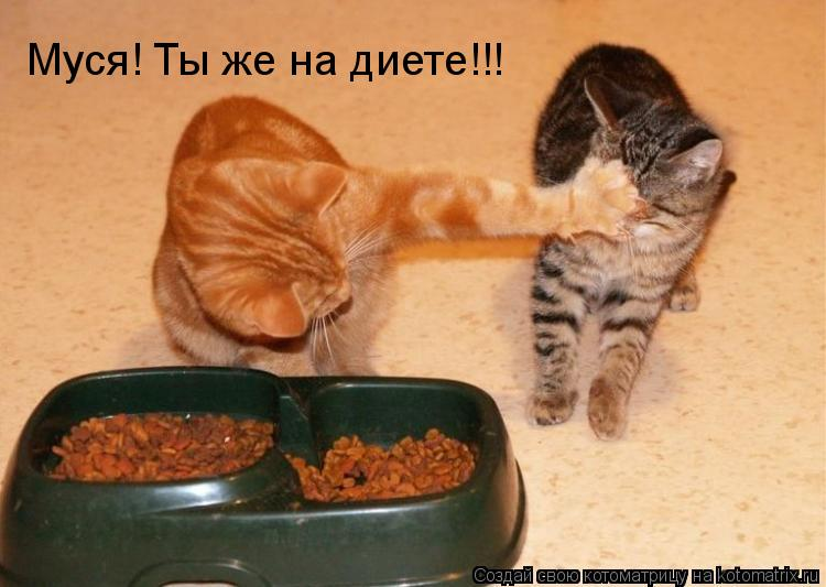 Котоматрица: Муся! Ты же на диете!!!