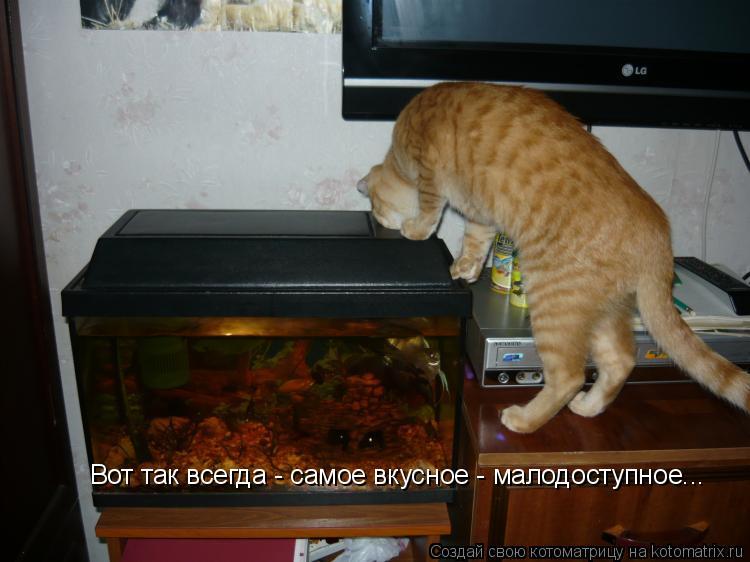 Котоматрица: Вот так всегда - самое вкусное - малодоступное...
