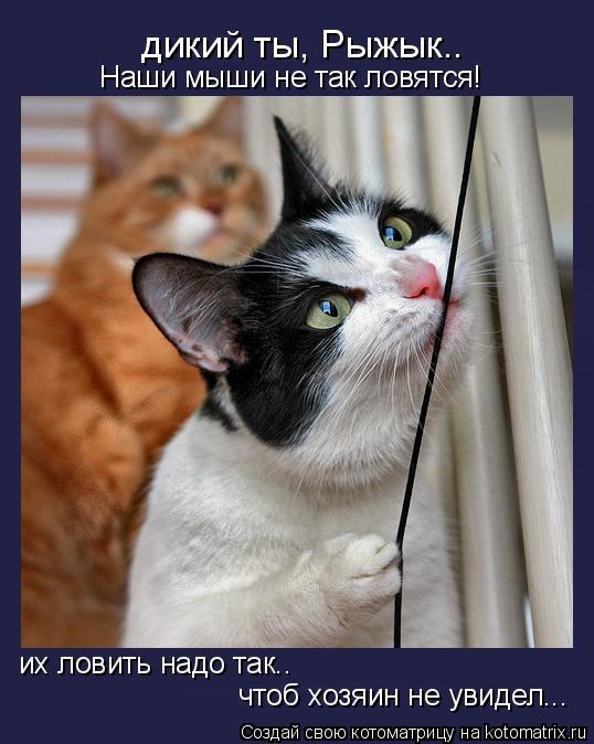 Котоматрица: дикий ты, Рыжык.. Наши мыши не так ловятся! их ловить надо так.. чтоб хозяин не увидел...