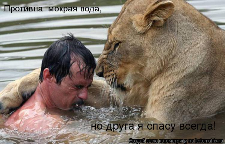Котоматрица: Противна  мокрая вода, но друга я спасу всегда!
