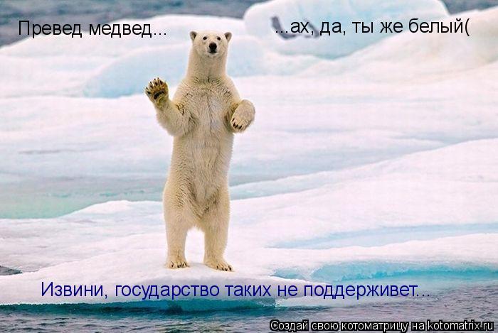 Котоматрица: Превед медвед... ...ах, да, ты же белый( Извини, государство таких не поддерживет...