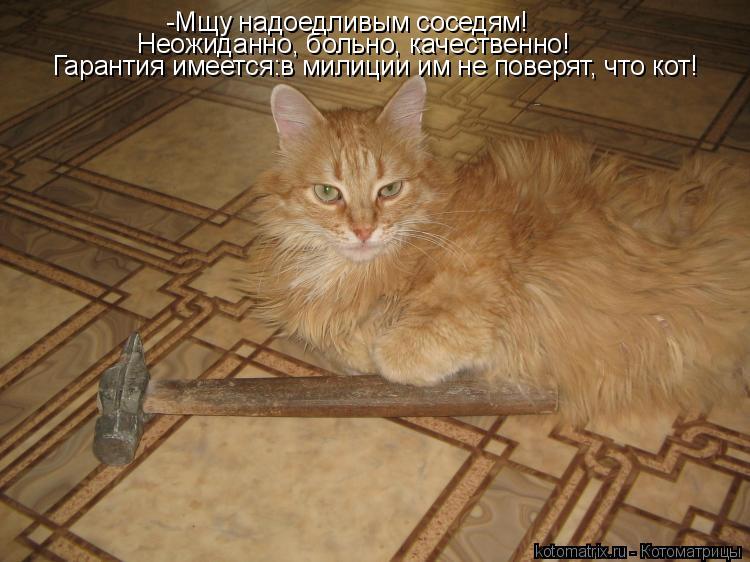 Котоматрица: -Мщу надоедливым соседям! Неожиданно, больно, качественно! Гарантия имеется:в милиции им не поверят, что кот!