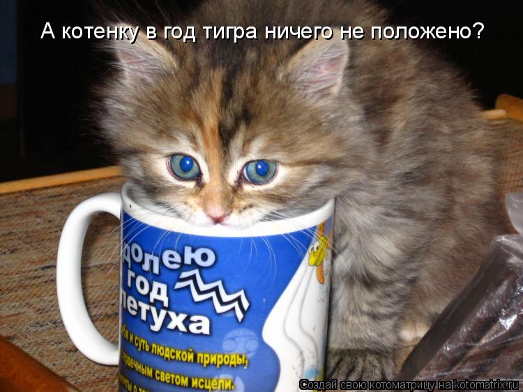 Котоматрица: А котенку в год тигра ничего не положено?